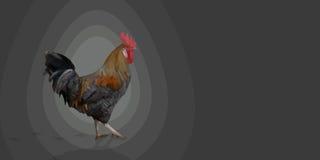 Coq polygonal de leghorn de coq sur le fond gris Photo stock