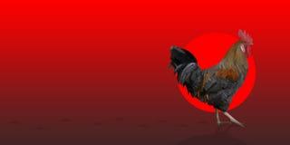 Coq polygonal de leghorn de coq sur le fond rouge Photo libre de droits