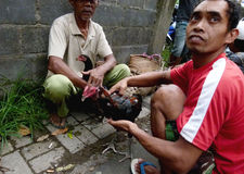 coqs Photographie stock libre de droits