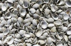 Coqs secs et blancs de Shell de la mer en Thaïlande photographie stock