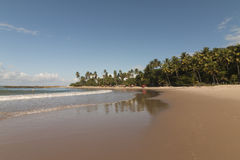 Coqueirinho海滩,康德铅,巴西 图库摄影