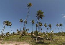 Coqueirinho beach, Conde PB, Brazil stock photo