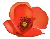 coquelicot kwiat royalty ilustracja