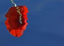 Coquelicot ; Poppy. Coquelicot en plein soleil ; Poppy in the sun stock photo