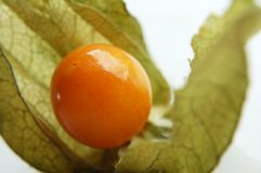 Coqueret comestible (Physalis) Photos libres de droits