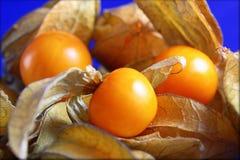 Coqueret comestible trois ou photographie de fruit de physalis Image libre de droits