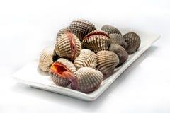 Coques crues fraîches, fruits de mer délicieux, style de nature Photos stock