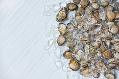 Coques de fruits de mer sur le fond de glace/océan cru frais de coque de sang de mollusques et crustacés photo libre de droits