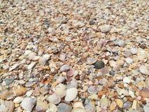Coques Shell sur la plage images stock