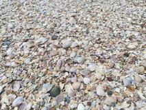 Coques Shell sur la plage images libres de droits
