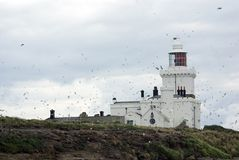 Coquet Island Lighthouse Royalty Free Stock Image