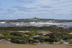 Coquet Island. Royalty Free Stock Photography