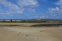 Coquet Island. Stock Images