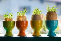 Coquetiers en céramique colorés avec des coquilles d'oeufs Photographie stock