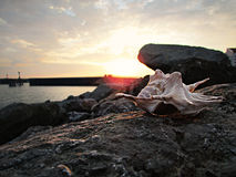 Coquillage au coucher du soleil en mer photographie stock
