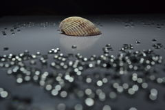 Coquillage avec Crystal Bokeh Photos stock