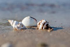 Coquillage images stock