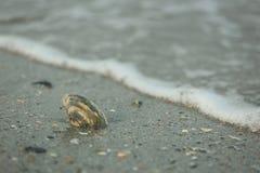 Coquillage dans le sable Photo libre de droits