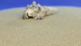 Coquillage de approche se trouvant sur le sable, plan rapproché banque de vidéos