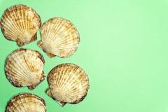 Coquillage de coquille d'océan d'isolement sur le fond coloré Texture de Shell, minimale photos stock