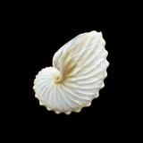 Coquillage de Nautilus ou d'argonautes de livre blanc Images libres de droits