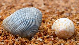 Coquillage deux sur le sable Photos libres de droits