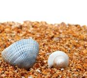 Coquillage deux sur le sable et le fond blanc Image libre de droits