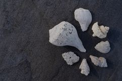 Coquillage et fragments sur Gray Stone photo stock