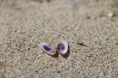 Coquillage ouvert sur le sable image libre de droits