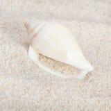 Coquillage soigné sur la plage sablonneuse photographie stock libre de droits