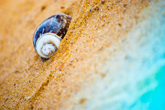 Coquillage sur la plage Images stock