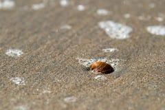 Coquillage sur la plage Photographie stock