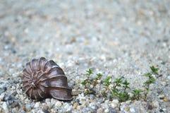 Coquillage sur la plage photo stock