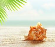 Coquillage sur la plage sablonneuse et la palmette photographie stock libre de droits