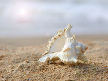 Coquillage sur le sable. images stock