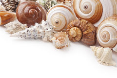 Coquillages image stock