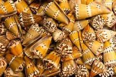 Coquillages Photo stock
