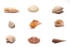 Coquillages Images stock
