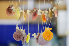 Coquillages Photographie stock