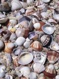 Coquillages assortis Image libre de droits
