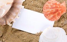 Coquillages avec le sable photographie stock