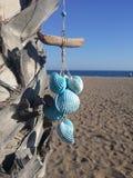 Coquillages bleus accrochants sur le palmier photo libre de droits