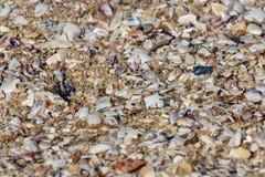 Coquillages cassés sur la plage images stock