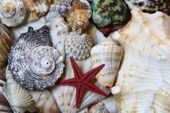 Coquillages colorés mélangés comprenant par exemple des mollusques et des étoiles de mer photographie stock