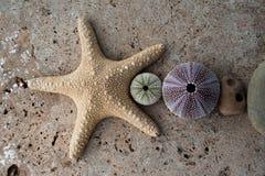 Coquillages d'?toiles de mer et pierre de plage photo stock