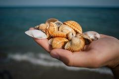 Coquillages dans les mains, apulia de côte de l'Italie de Mer Adriatique photo stock