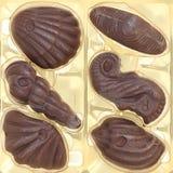 Coquillages de chocolat Photographie stock libre de droits
