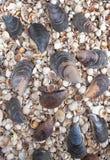 Coquillages de différentes couleurs Coquilles de mollusque Fond de Seashell image libre de droits