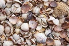 Coquillages de différentes couleurs Coquilles de mollusque Fond de Seashell photos libres de droits