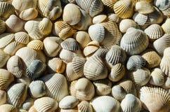 Coquillages de diff?rentes couleurs Coquilles de mollusque Fond de Seashell Texture des coquilles photo stock